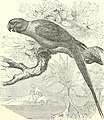 Stories about birds of land and water (1874) (14750556032).jpg