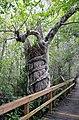 Strangler fig Big Cypress National Preserve.jpg