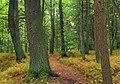 Streamside Woods (2) (9925689363).jpg