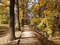 Stromořadí za LF UK.jpg