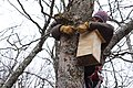 Sue Cameron installs a new squirrel box (8555347230).jpg