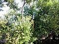 Sundarban (68).jpg