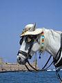 Sur le port de La Canée (Crète) (5743885593).jpg