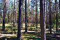 Svente Parish, LV-5473, Latvia - panoramio (10).jpg