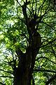 Sweet Chestnut Forest.jpg