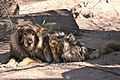 Sweet Old Dog (6077228604).jpg