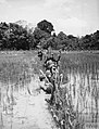 THE MALAYAN EMERGENCY 1948-1960 K14005.jpg