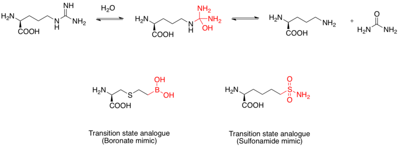 Transition state analogue example 3