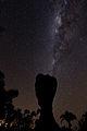 Taça em noite estrelada.jpg