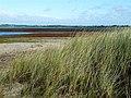 Tacumshane Nature Reserve - geograph.org.uk - 2091007.jpg