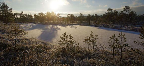 Talv Kõnnu Suursoos2.jpg
