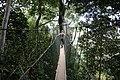 Taman Negara, Malaysia, Canopy Walkway.jpg