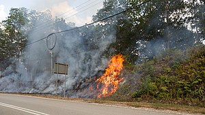 2016 Malaysian haze - Bush fires beside a road in Tambunan in the Interior Division on 23 March 2016.