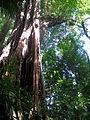 Tangkoko Habitat.JPG