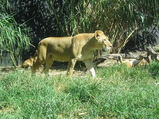 Taronga Zoo (2050524124)