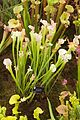 Tatton Park Flower Show 2014 027.jpg