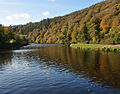 Tavy Estuary and Whittacliffe Wood 4.jpg