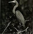 The American Museum journal (c1900-(1918)) (18159407285).jpg