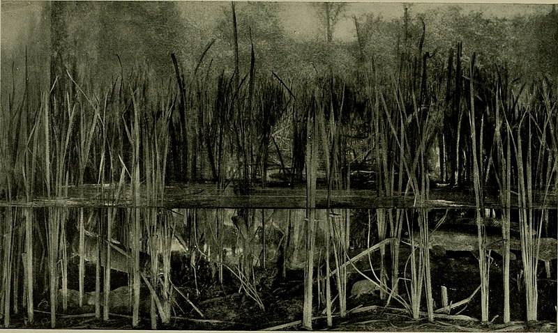 File:The American Museum journal (c1900-(1918)) (18161074941).jpg