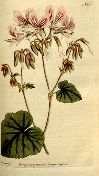 The Botanical Magazine, Plate 165 (Volume 5, 1792)