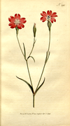 The Botanical Magazine, Plate 295 (Volume 9, 1795).png