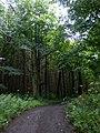 The Chalkland Way through Pocklington Wood - geograph.org.uk - 1416889.jpg