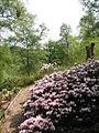 The Himalayan Garden - geograph.org.uk - 804763.jpg