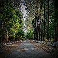 The National Botanical Garden of Bangladesh, Road.jpg