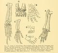 The Osteology of the Reptiles-190 jhgv rt.png