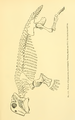 The Osteology of the Reptiles-259 sde er.png