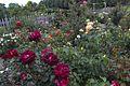 The Rose Garden (14932343127).jpg