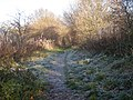 The Way of the Millennium on a frosty day - geograph.org.uk - 1073060.jpg
