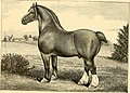 The breeds of live stock, and the principles of heredity (1887) (14758141606).jpg