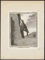 Tichodroma muraria - 1700-1880 - Print - Iconographia Zoologica - Special Collections University of Amsterdam - UBA01 IZ19200387.tif