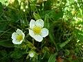 Tinyflower9.jpg