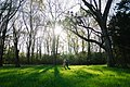 Together among the trees (Unsplash).jpg