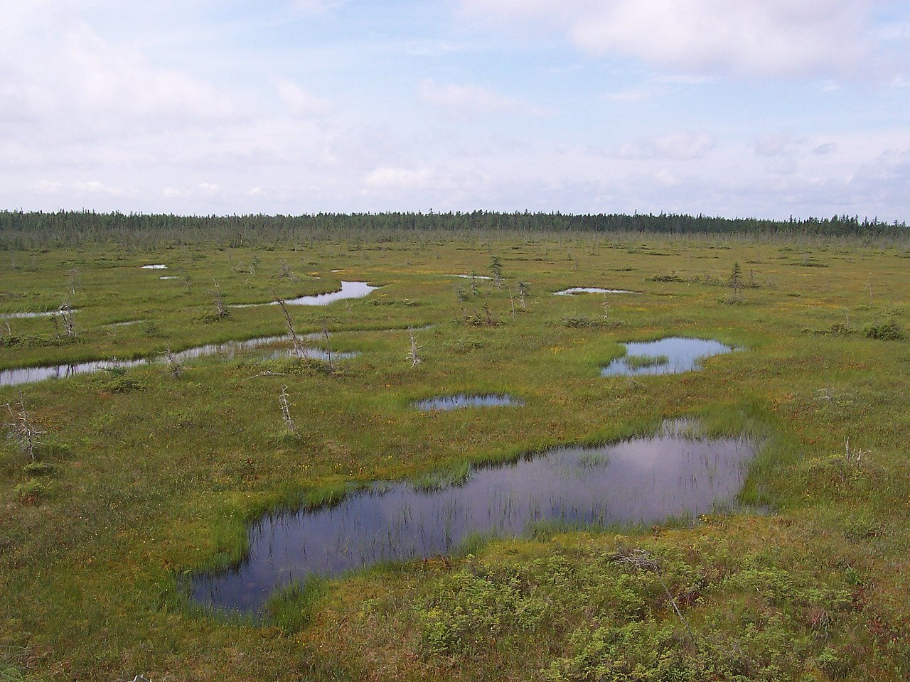 พีทมอส พักพบได้บริเวณพื้นที่ๆมีน้ำท่วมขัง