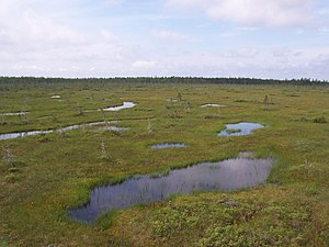 Bog - An expanse of wet Sphagnum bog in Frontenac National Park, Quebec, Canada. Spruce trees can be seen on a forested ridge in the background.