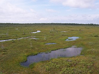 Boreal forest of Canada - A Sphagnum bog with spruce trees on a forested ridge in the background