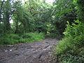 Track off Chovel Lane - geograph.org.uk - 485712.jpg