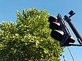 Traffic light and tree (43926418562).jpg