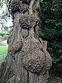 Tree (8039665444).jpg