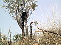 Tree climbing YVSREDDY.jpg