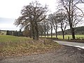 Tree lined road - geograph.org.uk - 1059104.jpg
