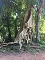 Tree near the Baphon.jpg