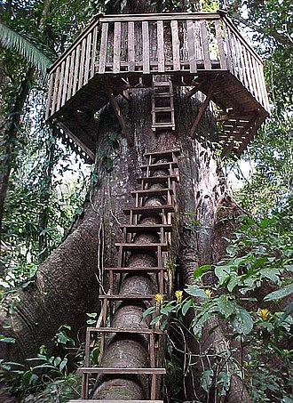 Tree house - A stairway and roundwalk