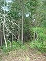 Trees at edge of woods, Horseshoe Bend NMP.jpg