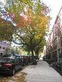 Trees on East Village street.JPG