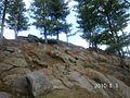 Treesnrocks.jpg