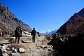 Trekking trail of Langtang valley.jpg